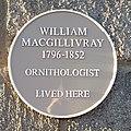 William Macgillivray.jpg