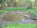 Winterfold Forest Pond - geograph.org.uk - 988318.jpg