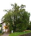 Winterlinde Puchenau NDM -450cm.jpg