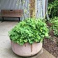 Wonderful Green (34184901896).jpg