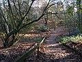 Woodland at The Lodge - geograph.org.uk - 1597706.jpg