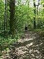 Woodland footpath - geograph.org.uk - 791544.jpg
