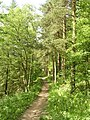 Woodland path, Chevin Country Park, Otley - geograph.org.uk - 177087.jpg