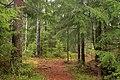 Woods near Sognsvann - panoramio.jpg