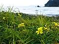 Yellow Summer (5702410346).jpg