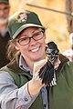 Yellowstone Bird Program (26) Wildlife Biologist Lauren Walker about to realse a spotted towhee (48804055033).jpg