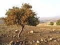 Yemişan agacı - panoramio.jpg