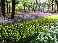 Yokohama Park.jpg