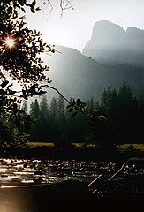 Yosemite Dawn by the Creek.jpg