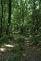 Zamcisko les 3.jpg