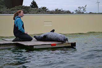 Deltapark Neeltje Jans - Seal and sea lion show