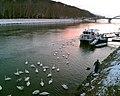 Zimná romantika na Váhu - panoramio.jpg