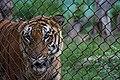Zoo of Ahmedabad, India (4052634446).jpg