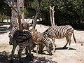 Zoobotánico Jerez (16).JPG