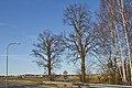Zwei Winterlinden an der B30 in Heidenreichstein 01 2014-03 NDM GD-138.jpg