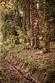 """Джунгли"" Нижнего парка - panoramio (1).jpg"