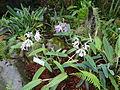 (Jardín Botánico de Quito) pic b1b.JPG