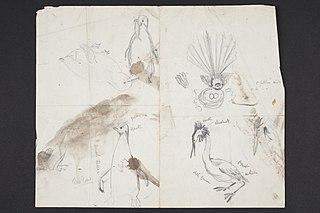 [Sketches of birds]