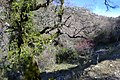 Árboles en El Pinsapar.jpg
