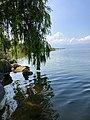 Çakırca köyünden söğütlerle bezenmiş İznik gölü.jpg