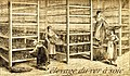 Élevage du vers à soie en Provence.jpg