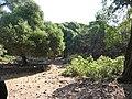 Δάσος Κουμαριάς 2.jpg