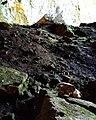 Το Σπήλαιο Ιδαίο Άντρο.jpg