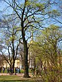 Александровский сад весной. - panoramio.jpg