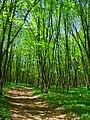 Весенний лес - panoramio (2).jpg