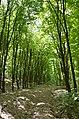 Городище (пам'ятка природи, Германівська сільська рада) 02.jpg