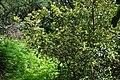 Грузия , ботанический сад - panoramio (3).jpg