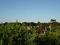 Дачный поселок - panoramio.jpg
