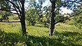 Дубрава. Волчья яма. Чистопольский р-н. РТ. Июль 2014 - panoramio.jpg