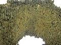 Залишки медресе. Старий Крим.jpg