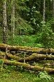 Кургальский полуостров, лес.jpg