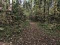 Лесные дорожки к Акуловскому 6.jpg