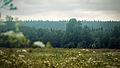 Луг в долине реки Смородинки.jpg