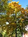 Осінь в Ковалівському парку.jpg