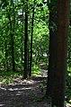 Парк Берёзовая роща в Киеве. Фото 26.jpg
