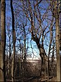Парк на Воробьевых горах - panoramio.jpg