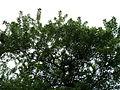 Парк шума Гази Баба во мај (186).JPG