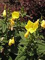 Растения в Седово 126.JPG