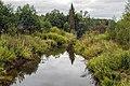 Река Выдрица в Мурашинском районе Кировской области.jpg