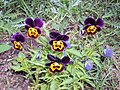 Цветочки из огорода.jpg