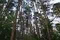 Черняевский лес, участок за ДКЖ 3.jpg