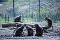 مجموعه عکس از رفتار میمون ها در باغ وحش تفلیس- گرجستان 11.jpg