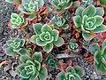 گلخانه کاکتوس دنیای خار در قم. کلکسیون انواع کاکتوس 16.jpg