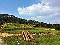 新丰司茅坪林场20150412 - panoramio (121).jpg