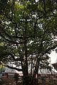 横浜開港資料館 中庭 たまくす.jpg