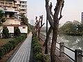 沁园社区的河边小径 - panoramio.jpg